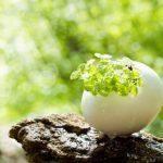 卵の殻から小さい葉っぱ
