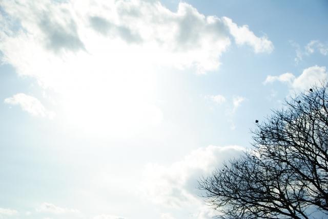 冬の空と枯れ木
