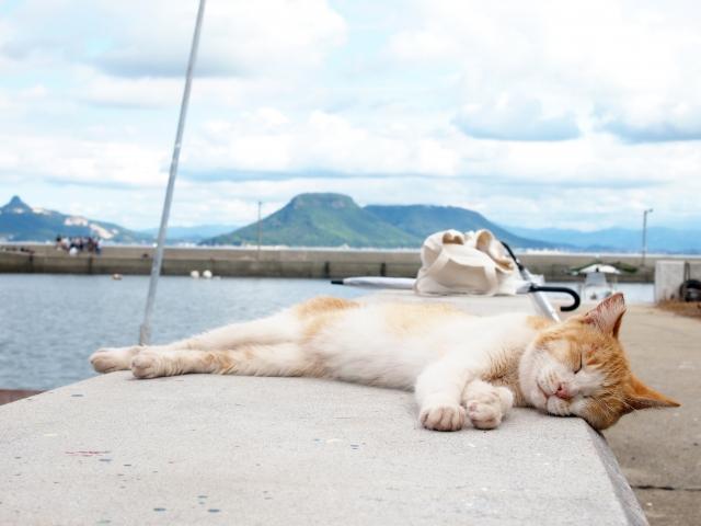 海沿いで猫が横になっている